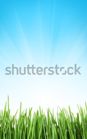 Sunny spring background with grass and sky Stock photo © karandaev