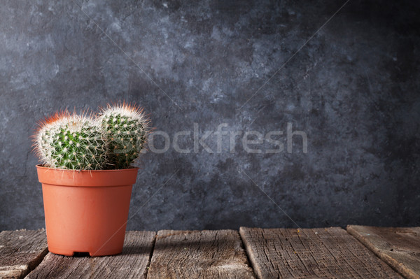 Cactus in front of classroom chalk board Stock photo © karandaev