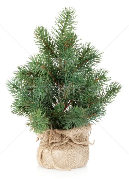 Fake Mini Weihnachtsbaum isoliert weiß Baum Stock foto © karandaev