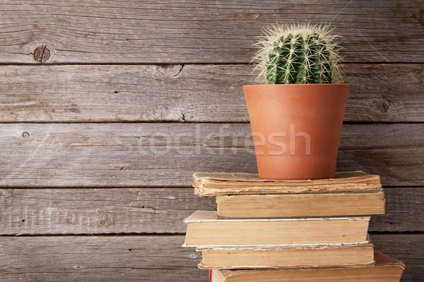 Cactus oude boeken houten muur exemplaar ruimte Stockfoto © karandaev
