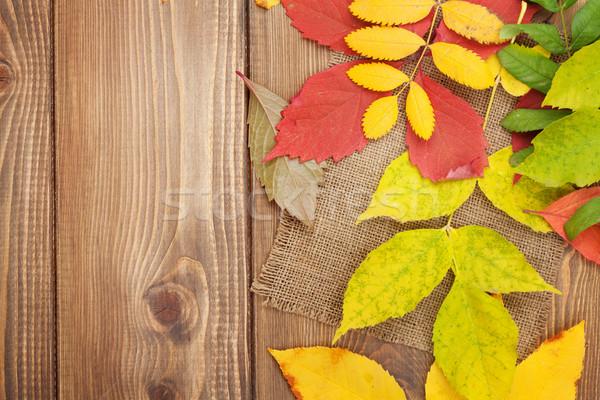 Colorato legno copia spazio natura foglia Foto d'archivio © karandaev