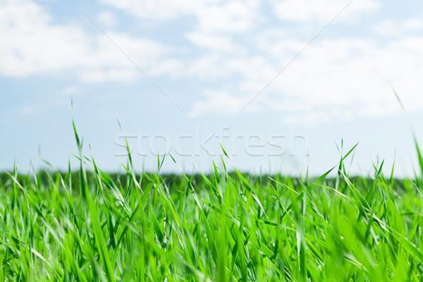 Yeşil ot alan mavi gökyüzü güneşli yaz gün Stok fotoğraf © karandaev