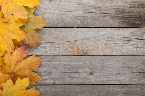 Colorful autumn maple leaves Stock photo © karandaev