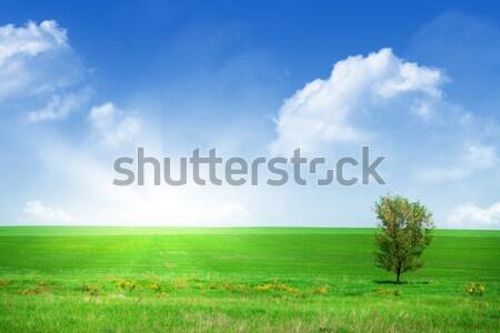 Grama verde campo blue sky céu árvore primavera Foto stock © karandaev