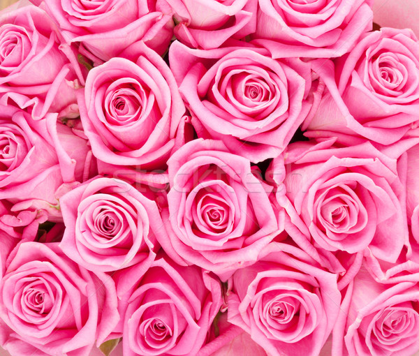 Valentines day background with pink roses Stock photo © karandaev
