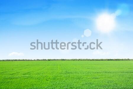 Hierba verde campo cielo azul sol cielo primavera Foto stock © karandaev