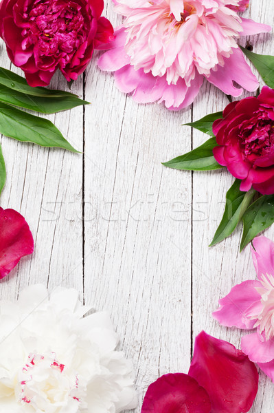 Garden peony flowers on wood Stock photo © karandaev