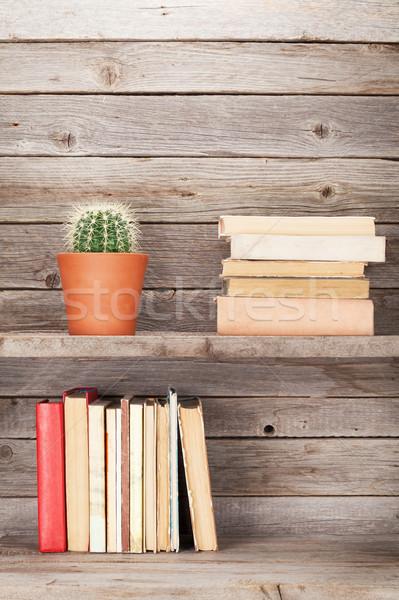 старые книгах шельфа кактус завода Сток-фото © karandaev