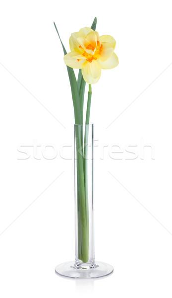 黄色 スイセン 花瓶 孤立した 白 花 ストックフォト © karandaev
