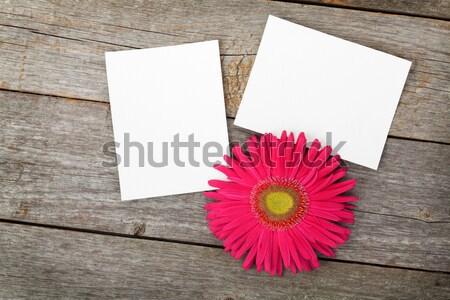 Two blank photo frames and fresh pink flower Stock photo © karandaev