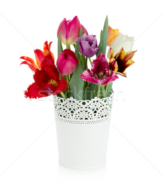 Multi colored tulips in flowerpot Stock photo © karandaev