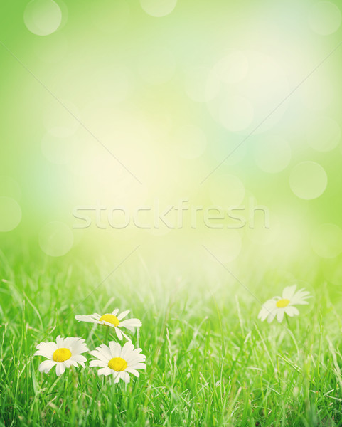 Stock photo: Chamomile flowers on grass field