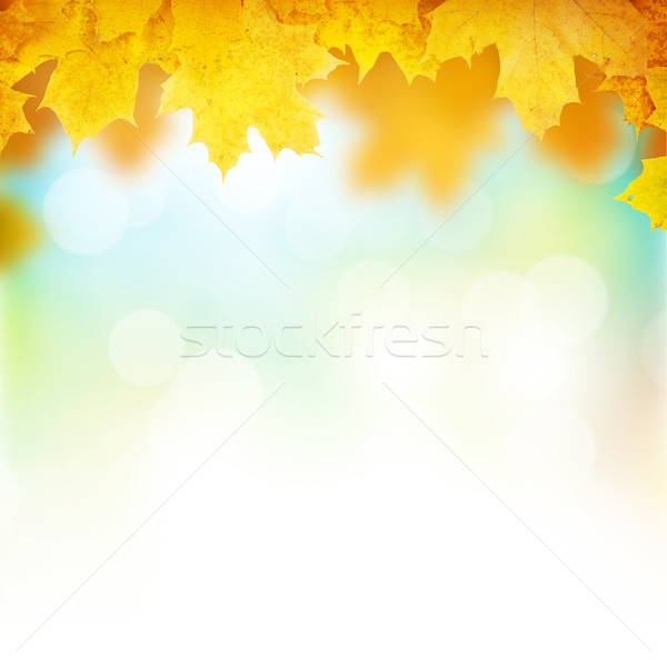 Autumn background with maple leaves Stock photo © karandaev