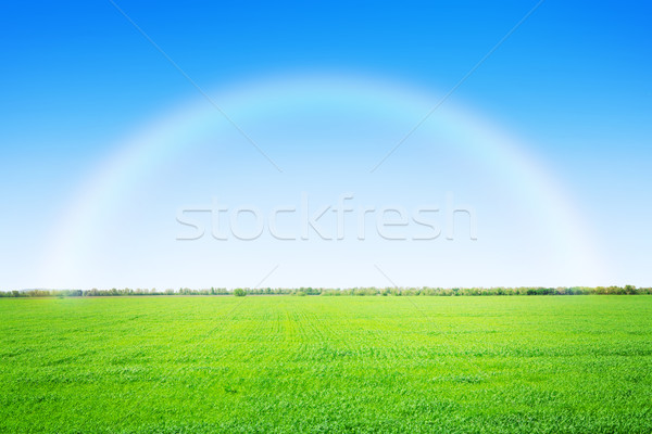 зеленая трава области Blue Sky радуга небе природы Сток-фото © karandaev
