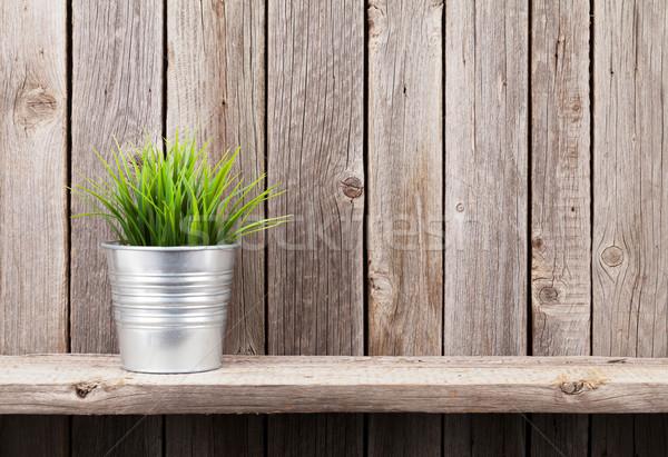 Plant in flowerpot on shelf Stock photo © karandaev