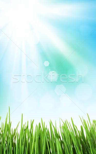 Солнечный весны трава небе аннотация текстуры Сток-фото © karandaev