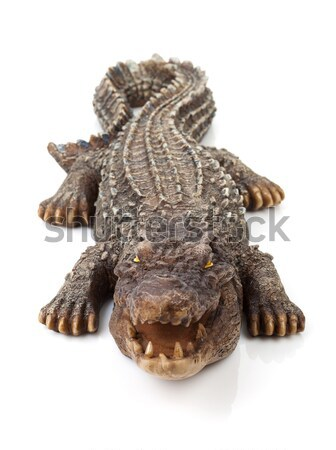 Wildlife krokodil Open mond geïsoleerd witte Stockfoto © karandaev