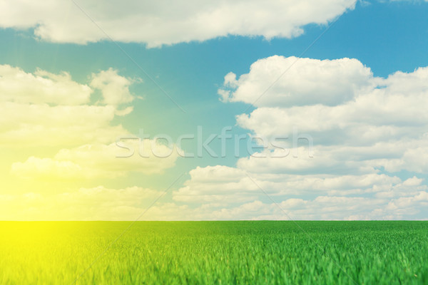 Hierba verde campo cielo azul nubes verano paisaje Foto stock © karandaev