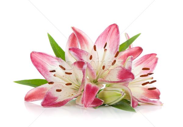 Сток-фото: три · розовый · Лилия · изолированный · белый · весны