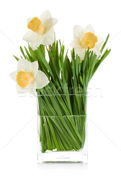 Branco narcisos vidro vaso isolado primavera Foto stock © karandaev