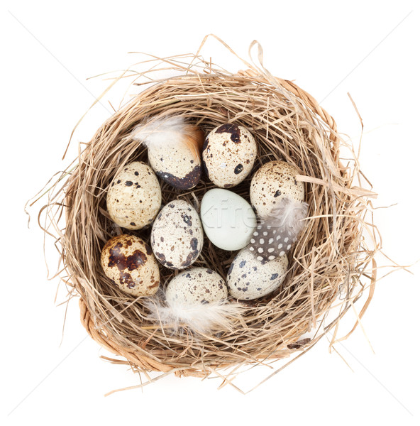 Quail eggs nest Stock photo © karandaev