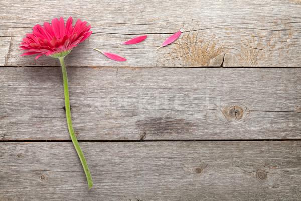Magenta flor mesa de madeira cópia espaço flores natureza Foto stock © karandaev