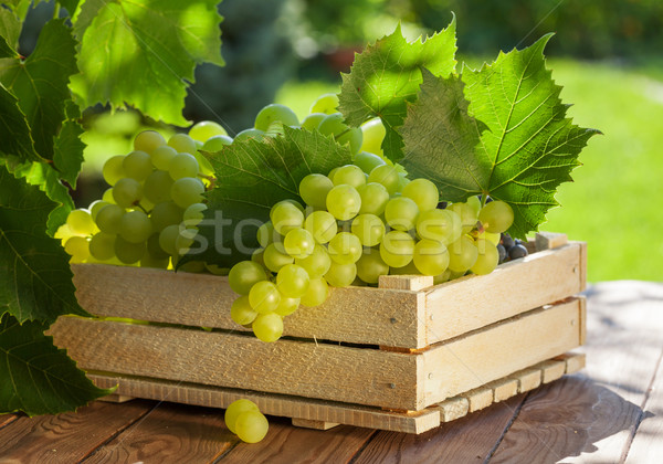 Blanche raisins vigne jardin table Photo stock © karandaev