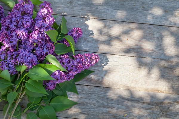 Fioletowy liliowy kwiaty ogród tabeli górę Zdjęcia stock © karandaev