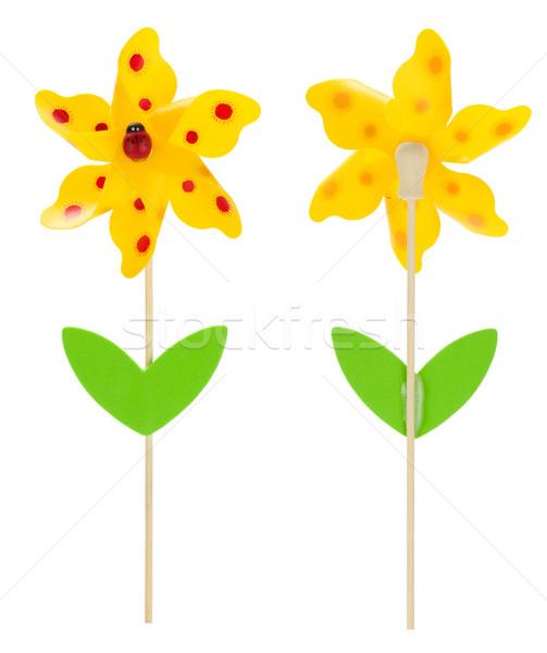 Stockfoto: Bloem · lieveheersbeestje · geïsoleerd · witte · voorjaar