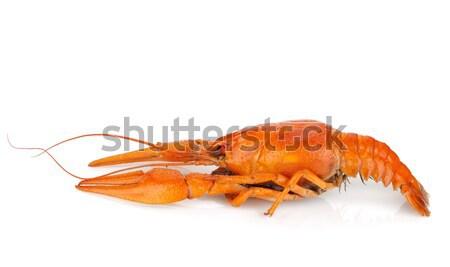 Three boiled crayfishes Stock photo © karandaev