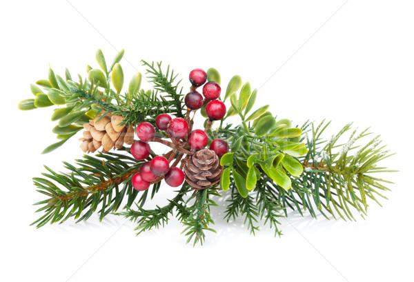 Weihnachtsbaum Zweig Dekor isoliert weiß Baum Stock foto © karandaev