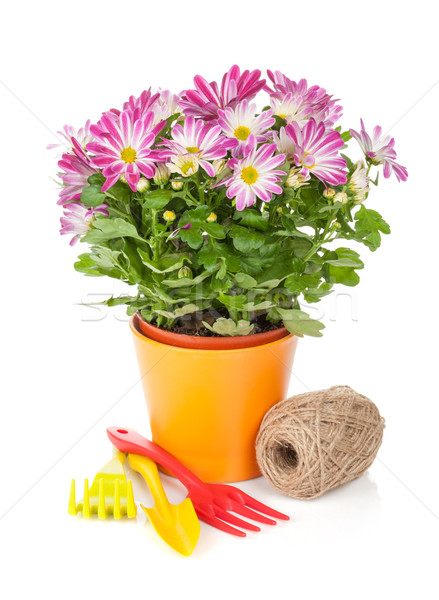 Potted flower and garden tools Stock photo © karandaev