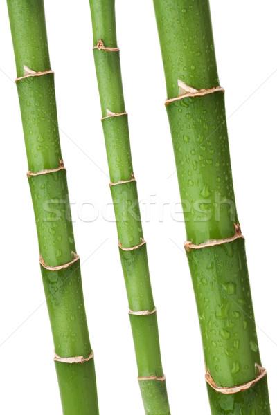свежие бамбук капли изолированный белый дерево Сток-фото © karandaev