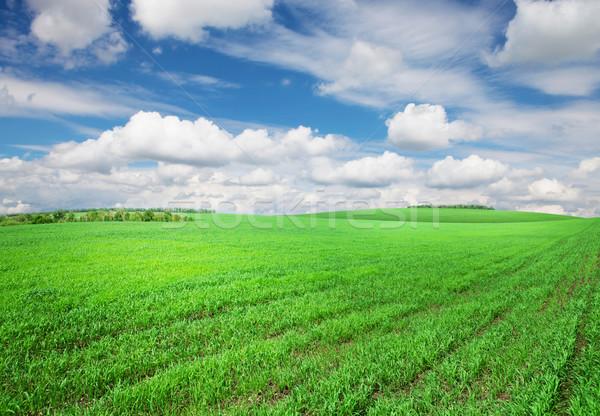 Yeşil ot alan gökyüzü bulutlar mavi gökyüzü bahar Stok fotoğraf © karandaev