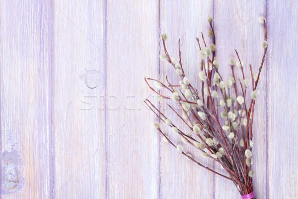 Bichano salgueiro monte mesa de madeira cópia espaço flor Foto stock © karandaev
