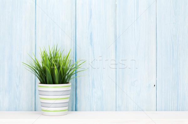 Cserepes növény polc kék fából készült fal kilátás Stock fotó © karandaev