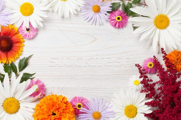 Colorful garden flowers Stock photo © karandaev
