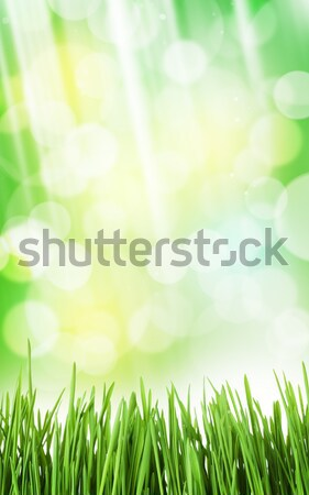 Sunny spring background with grass and bokeh Stock photo © karandaev