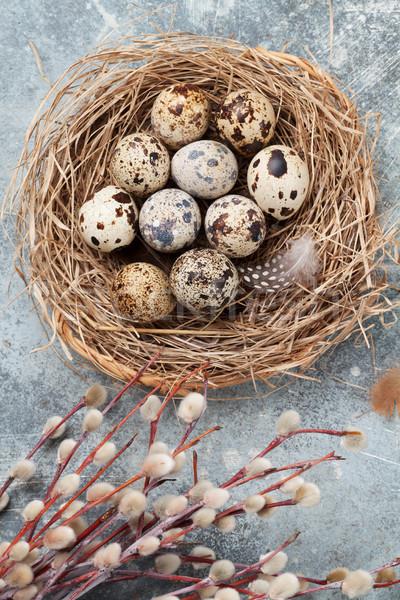 Eieren nest pussy wilg Pasen wenskaart Stockfoto © karandaev