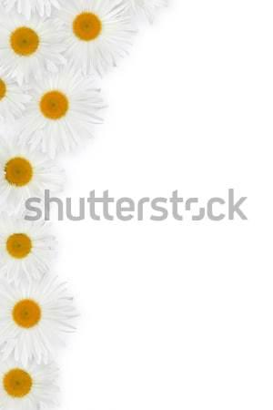 Chamomile flower decor Stock photo © karandaev
