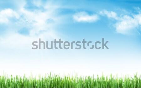 Abstrakten sonnig Sommer Gras blauer Himmel Ostern Stock foto © karandaev