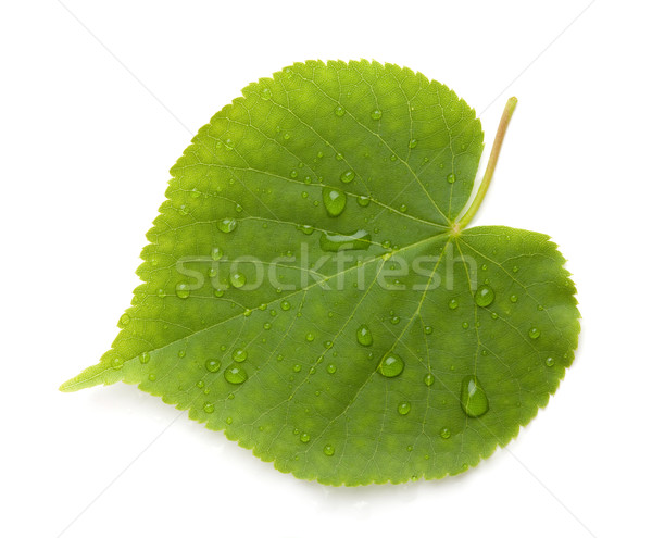 Green leaf with water drops Stock photo © karandaev