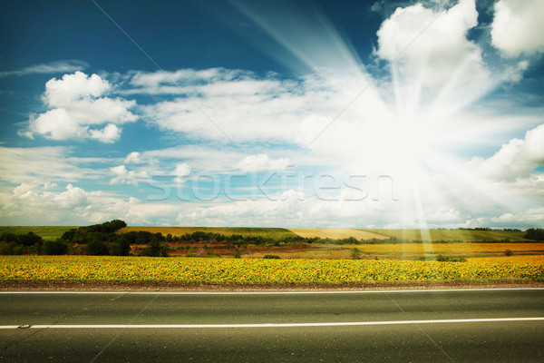 Road through the yellow sunflower field Stock photo © karandaev