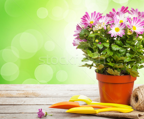 Potted flower and garden tools Stock photo © karandaev