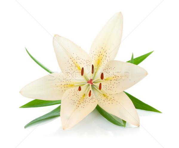 Branco lírio folhas verdes isolado flor primavera Foto stock © karandaev