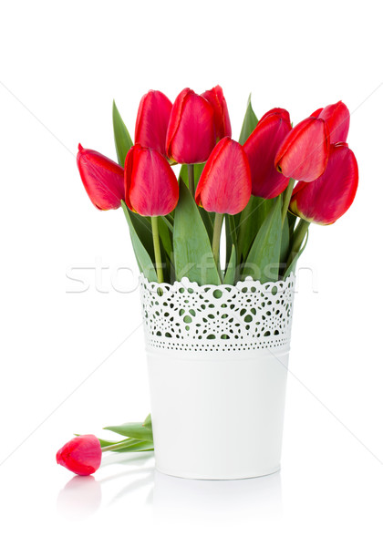 Red tulips in flowerpot Stock photo © karandaev