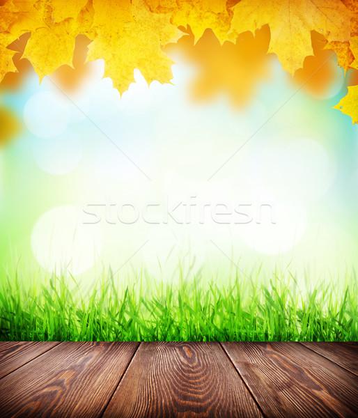 Otono piso hierba bokeh hierba verde Foto stock © karandaev