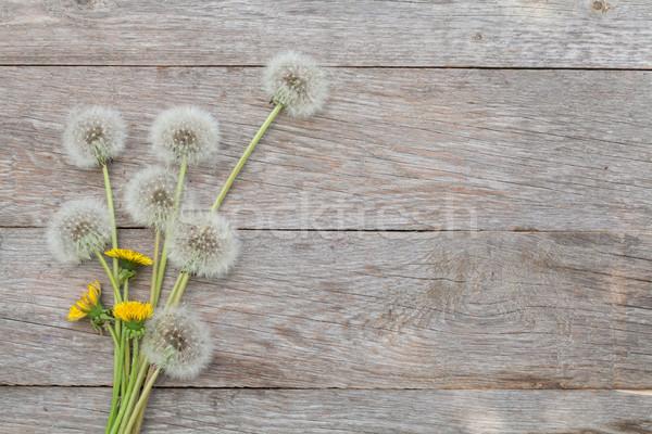 Photo stock: Pissenlit · fleurs · bois · espace · de · copie · printemps · bois