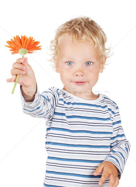 Branco cabelos cacheados olhos azuis bebê flor isolado Foto stock © karandaev