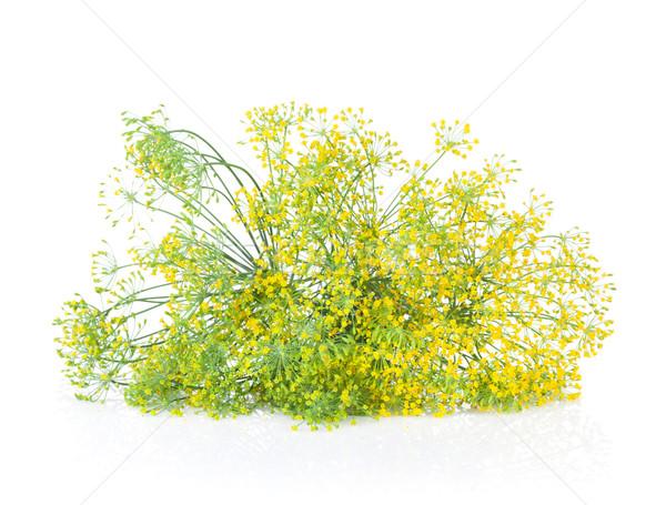 Fresh garden herbs. Blossom dill Stock photo © karandaev
